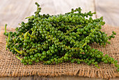 young  peppercorns on wooden  background