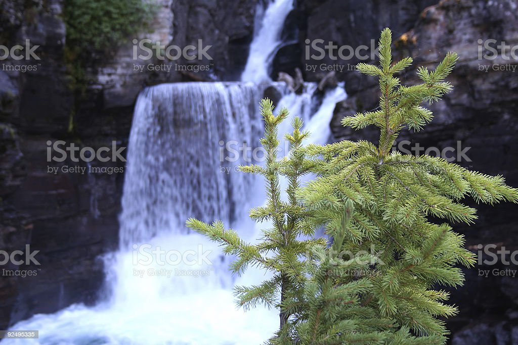 Young pine tree and waterfalls stock photo