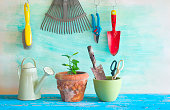 young plant and gardening tools