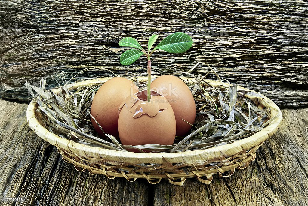 Young plant grew out of eggs in the nest. royalty-free stock photo