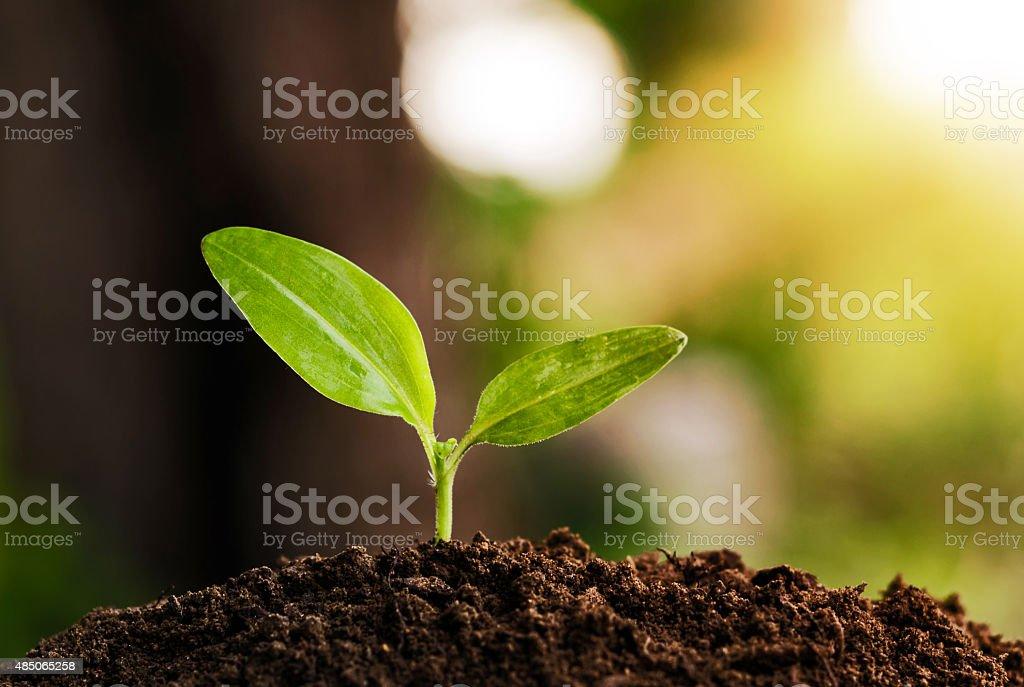 young plant grow and sunshine stock photo