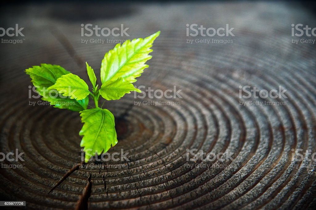 Young plant growing from old stump stock photo