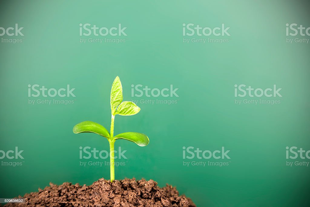 Young plant growing in soil before blackboard stock photo