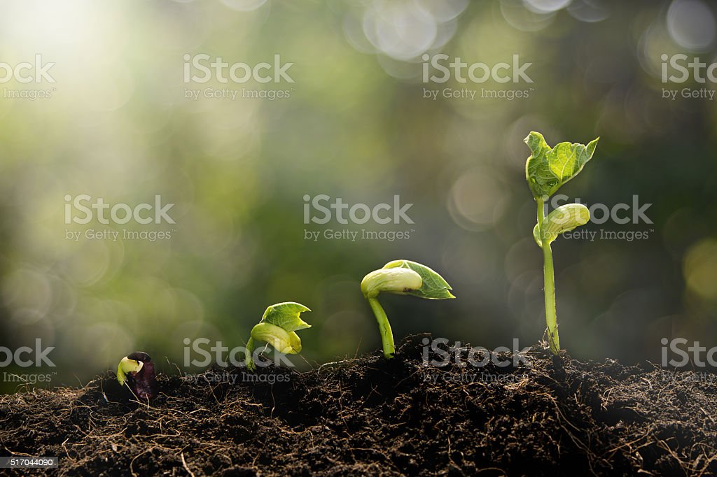 Young plant growing in the morning stock photo