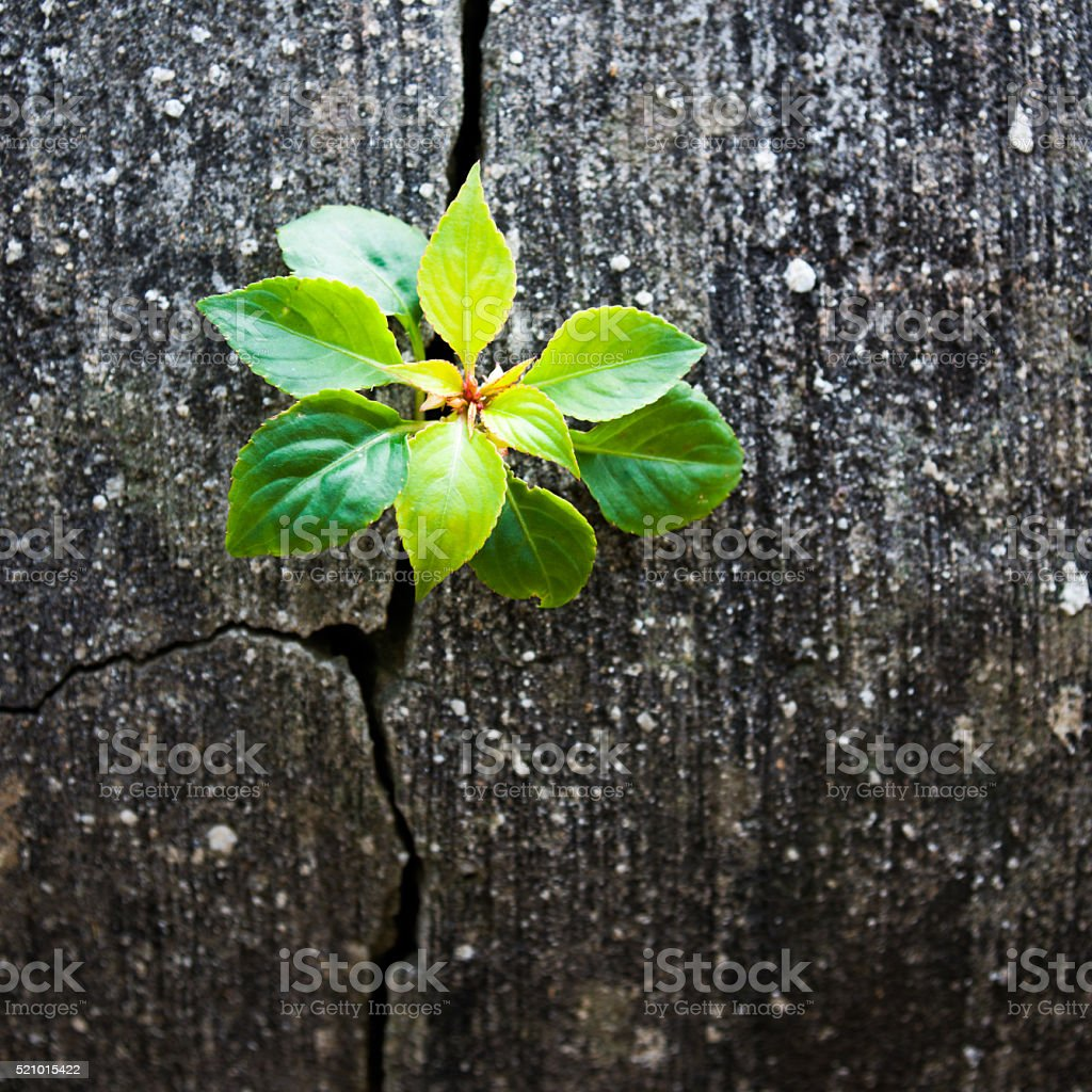 Young plant growing out of concrete stock photo