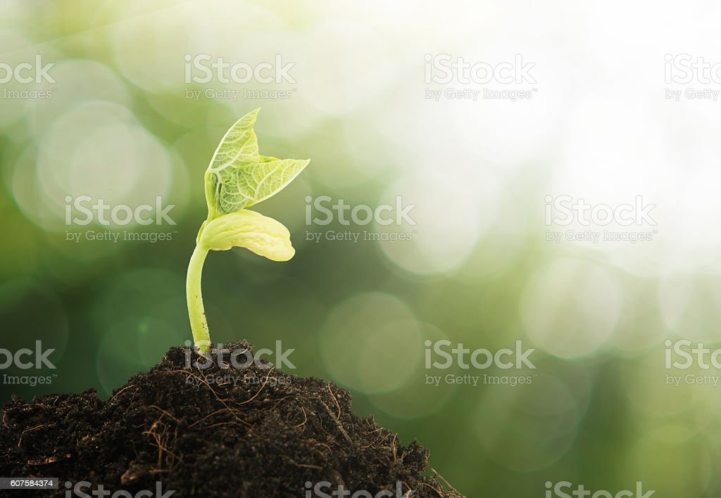 Young plant growing with green bokeh background stock photo