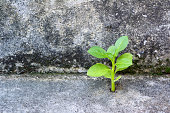 young plant growth on concrete with moss