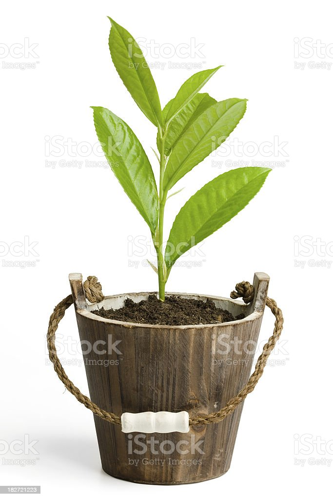Young plant in a pot royalty-free stock photo