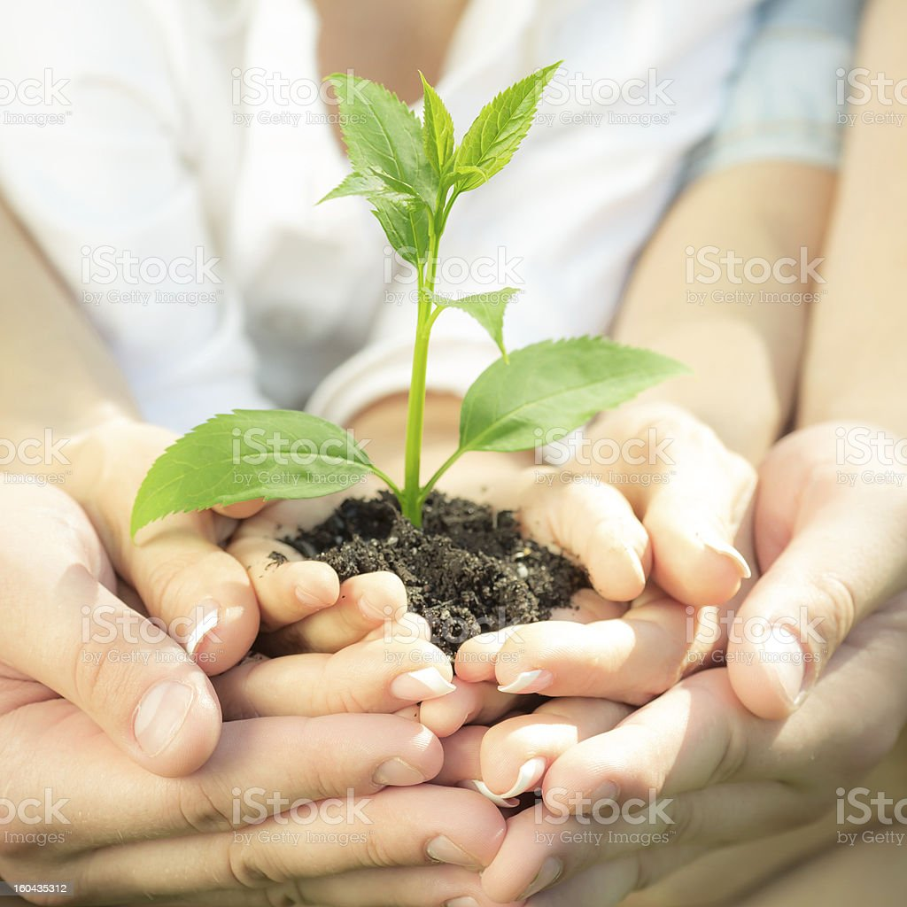 Young plant in hands stock photo