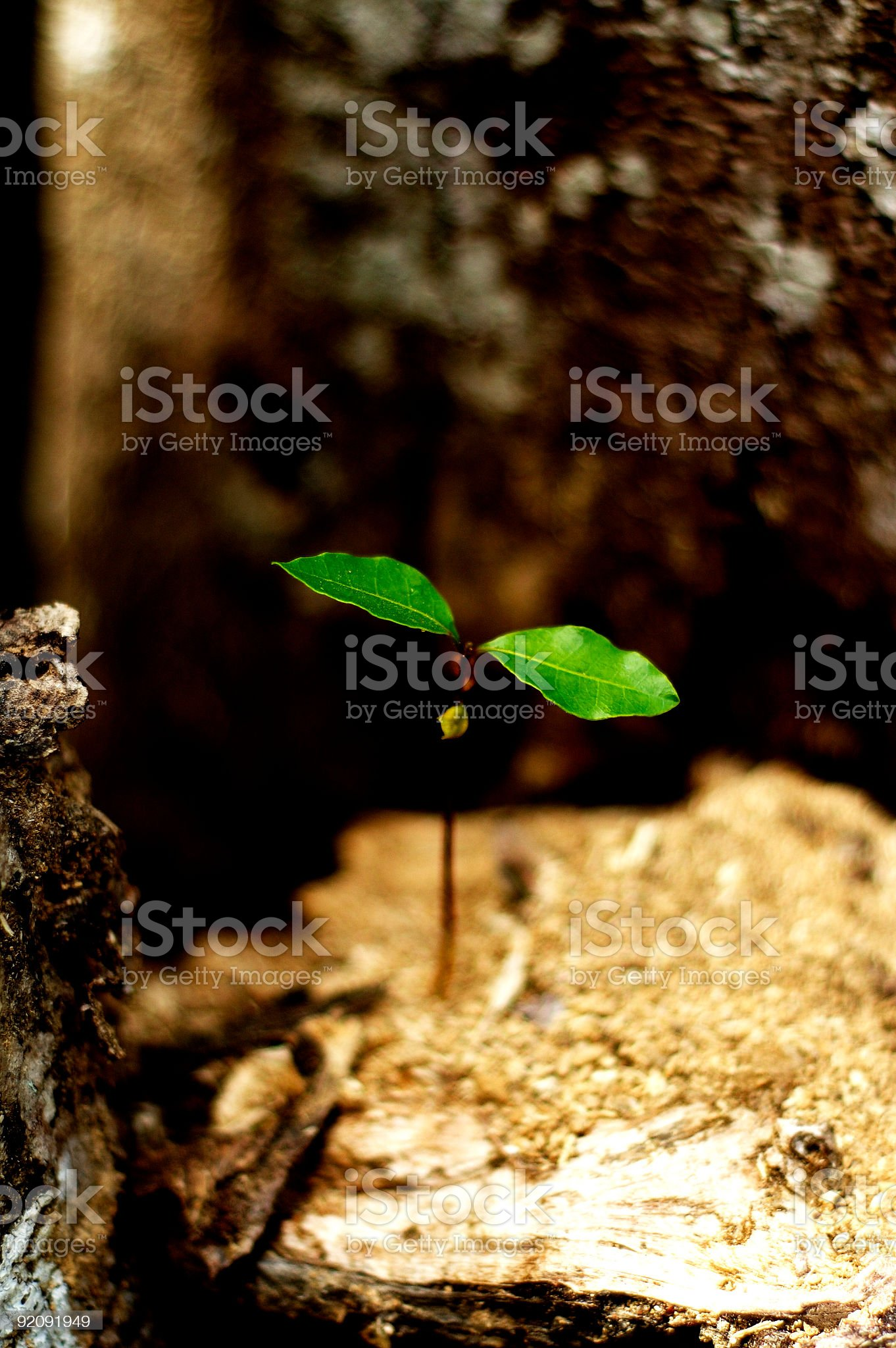 Young Plant On Blurred Background royalty-free stock photo