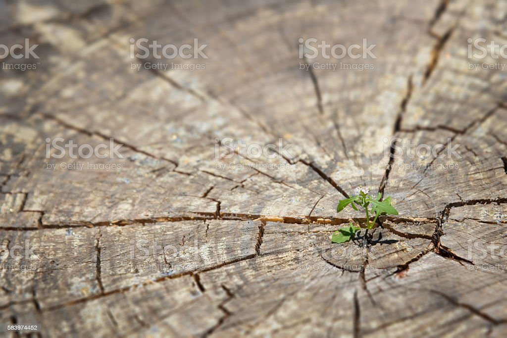 young plant sprout growing in old wood-  new life concept stock photo
