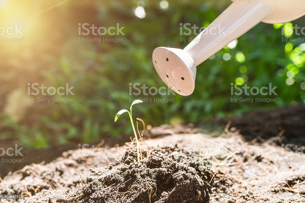 Young plant with watering can stock photo