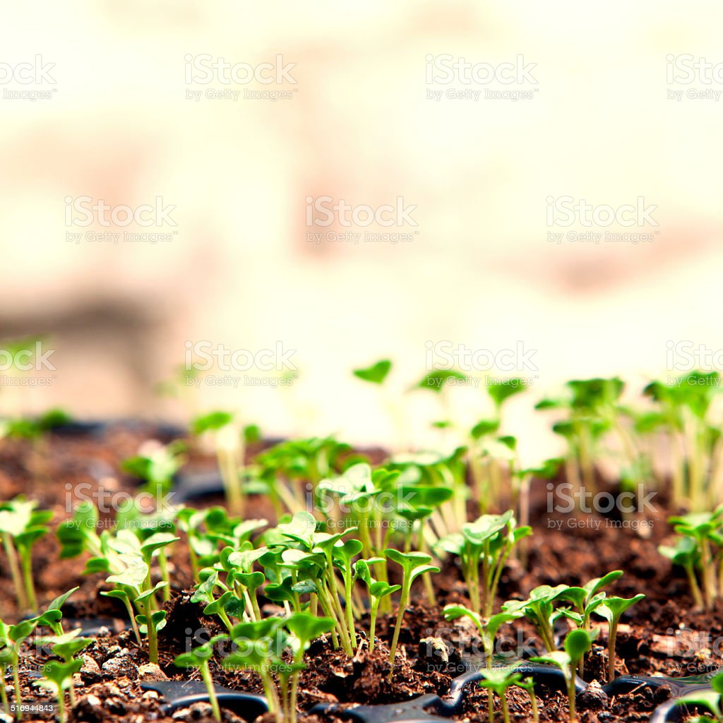 Young plants in early spring stock photo