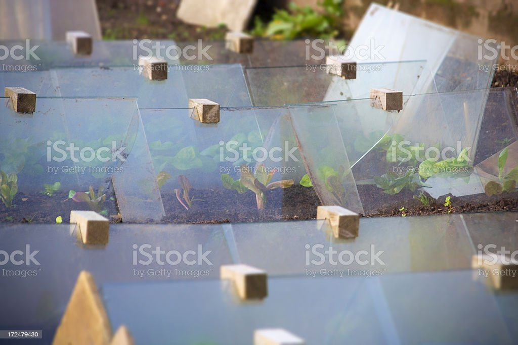 Young Plants stock photo