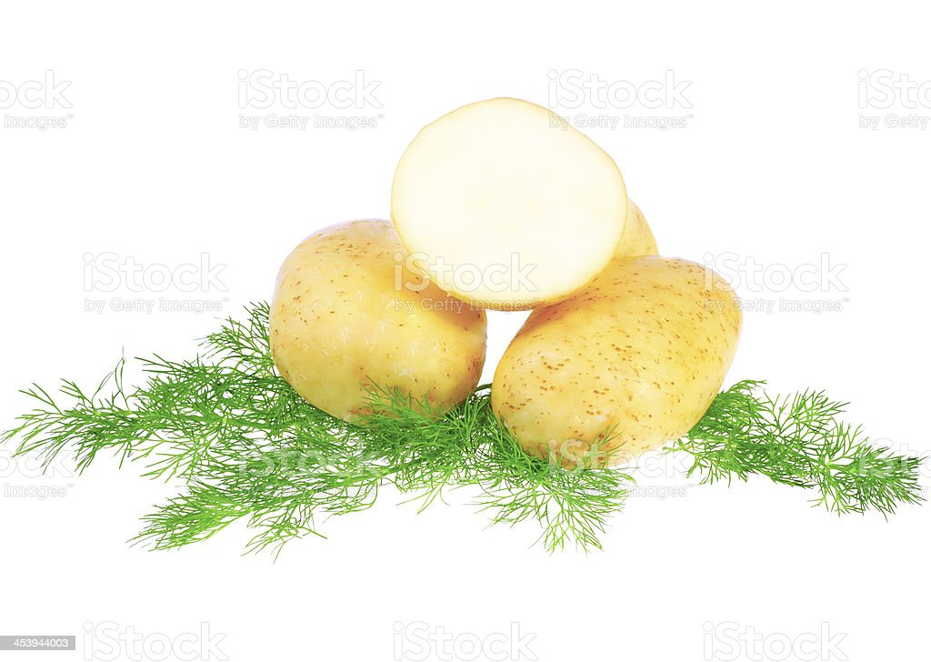 Young potatoes, decorating of dill . Isolated royalty-free stock photo