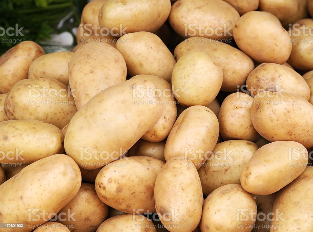 Young potatoes pile stock photo