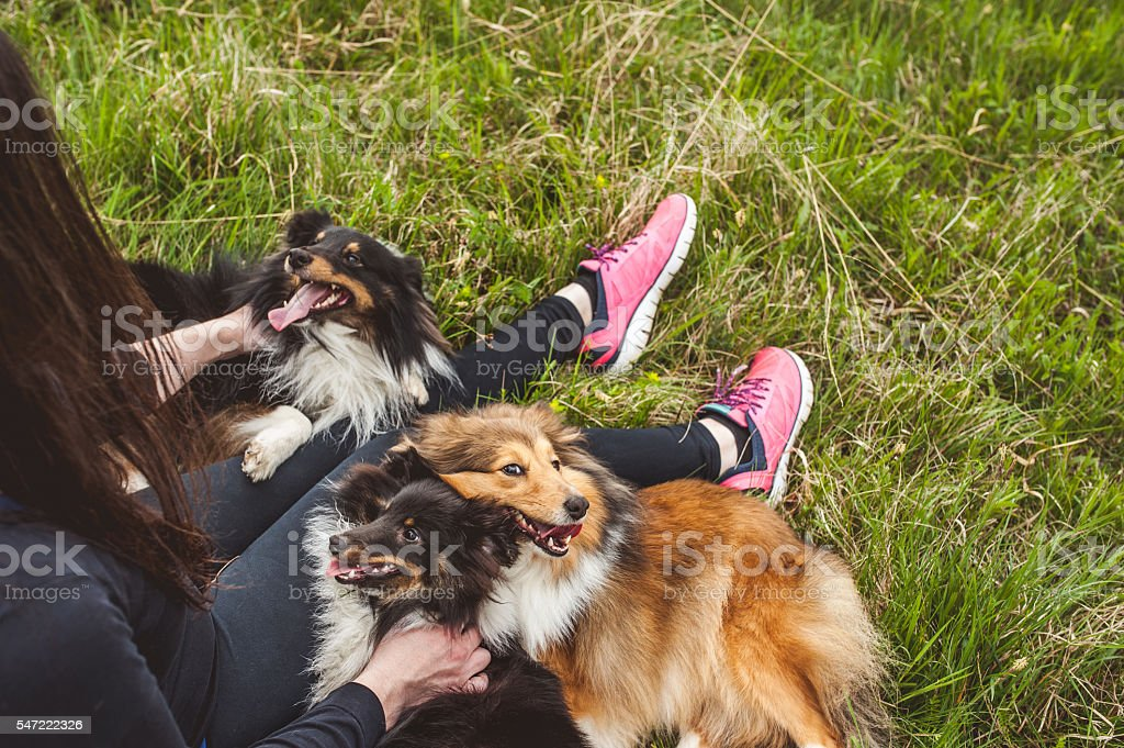 Young pregnant woman and her dogs outdoors stock photo