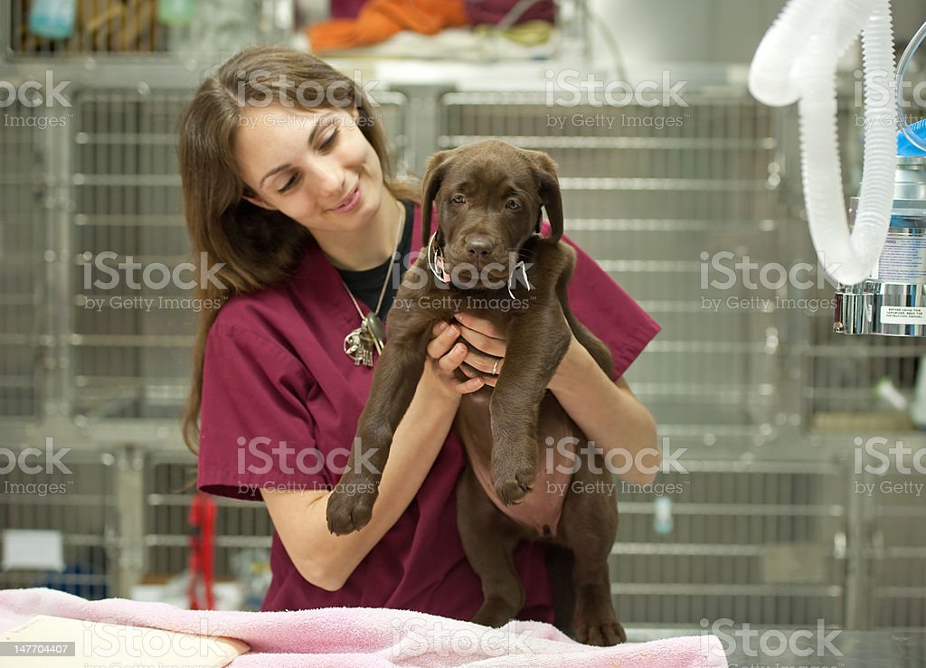 young puppy at the vet's royalty-free stock photo