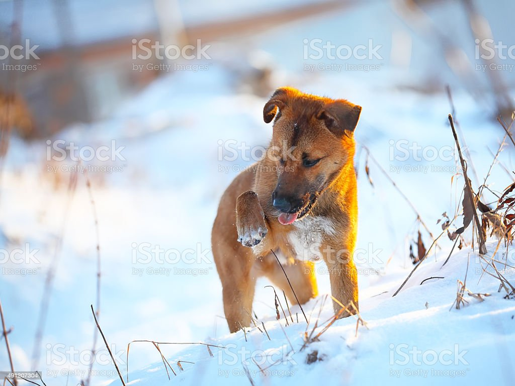 young puppy on snow in winter stock photo