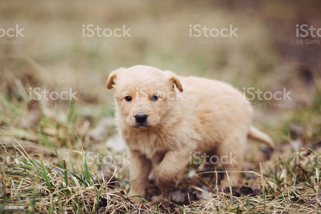 Young puppy outdoor in spring stock photo