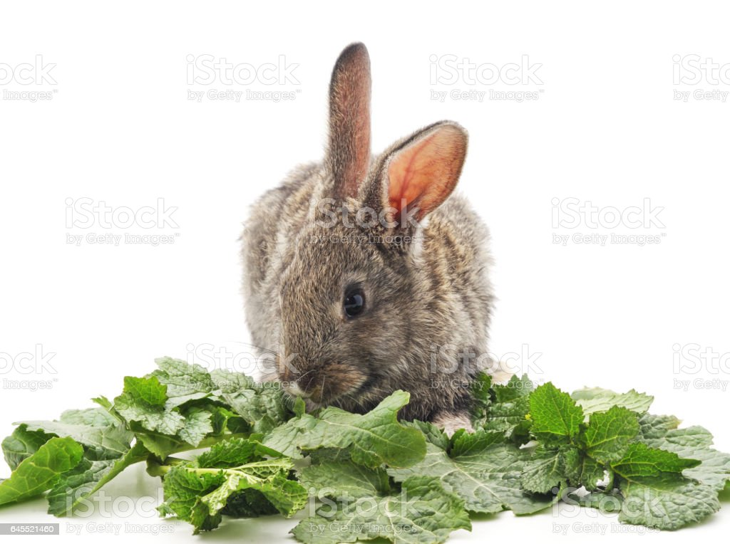 Young rabbit eat greens. stock photo