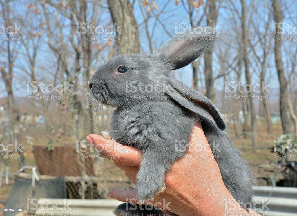 Young rabbit stock photo