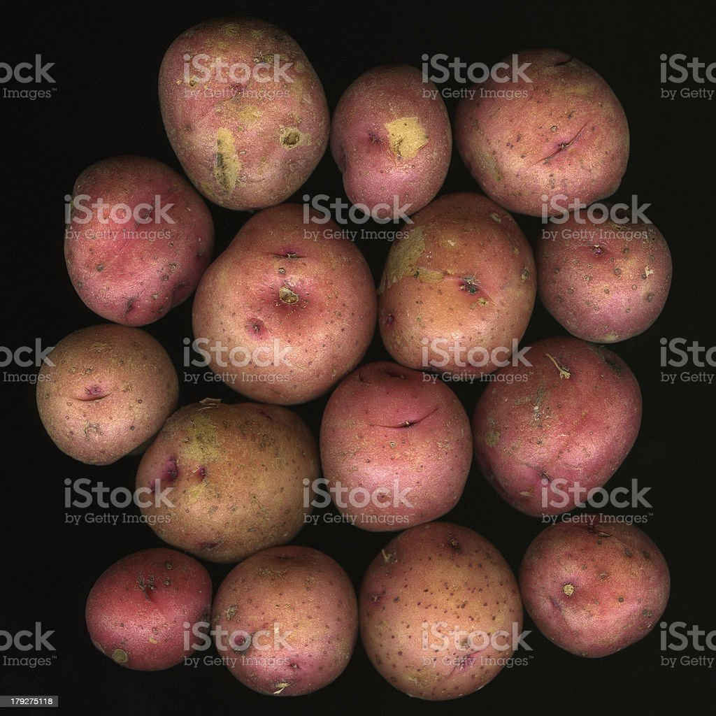 young red potatoes royalty-free stock photo