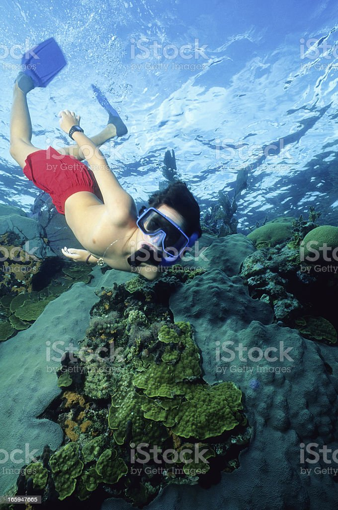 Young Reef Eplorer royalty-free stock photo