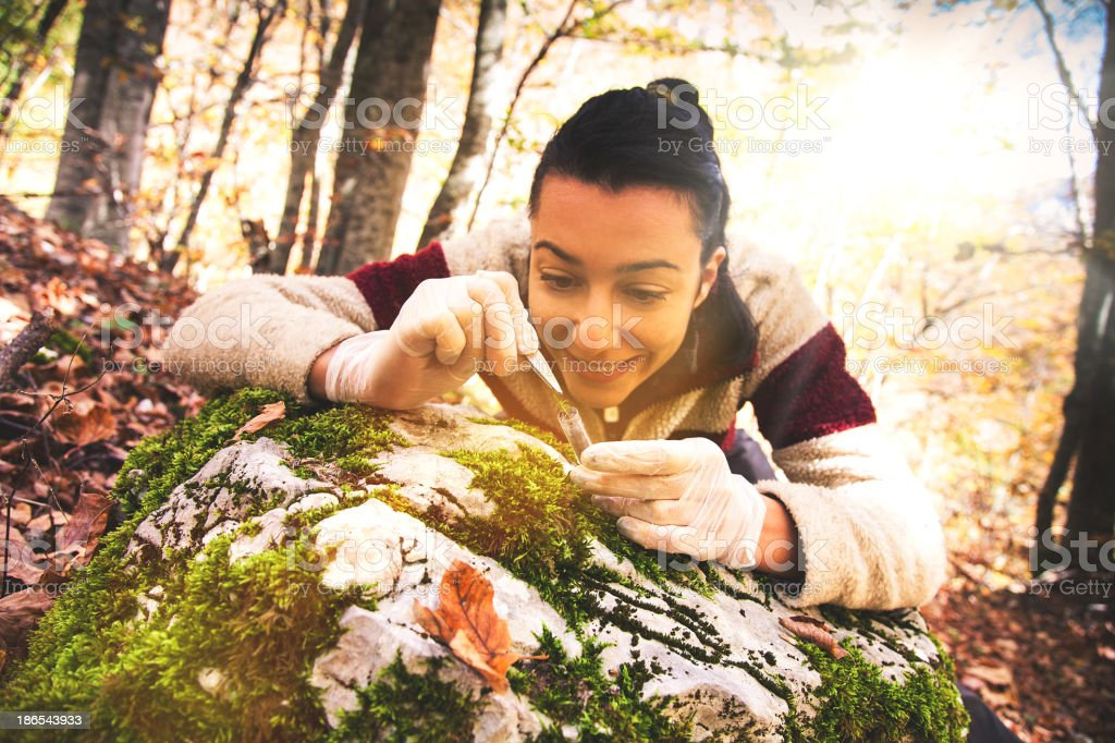 Young researcher woman in the forest stock photo