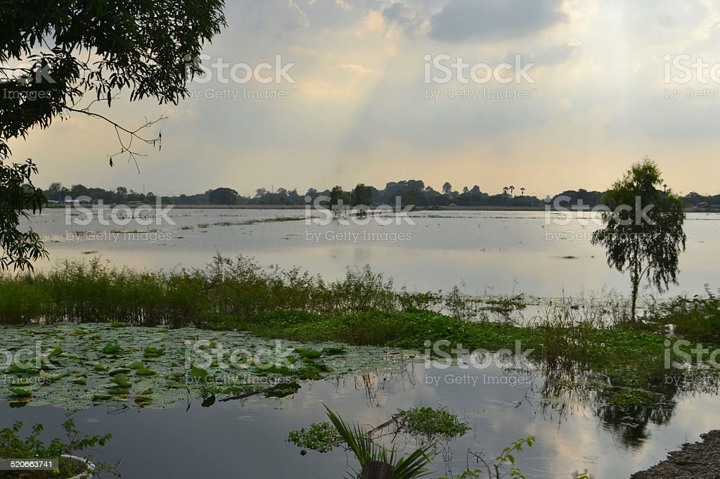 Young rice field flooded by water in Thailand stock photo