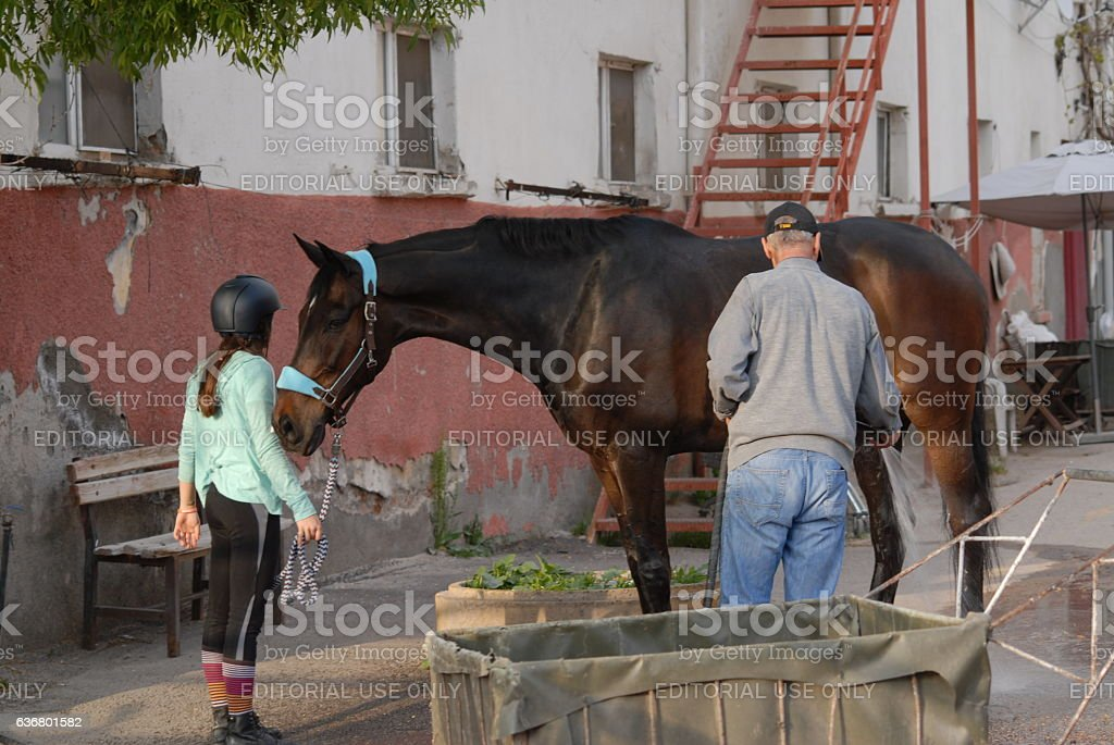 Young rider with horse stock photo