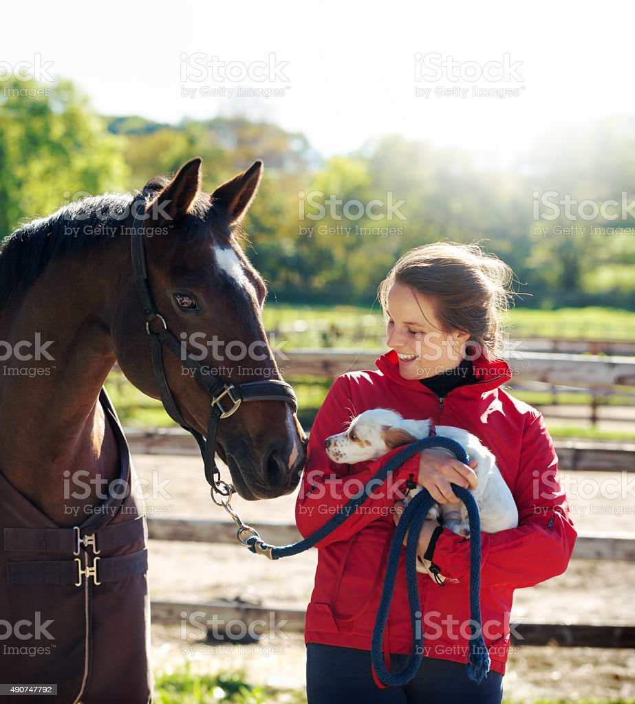 Young Rider with puppy and horse, Norway stock photo