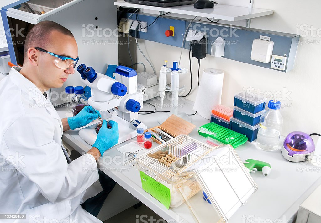Young scientist works in the laboratory stock photo