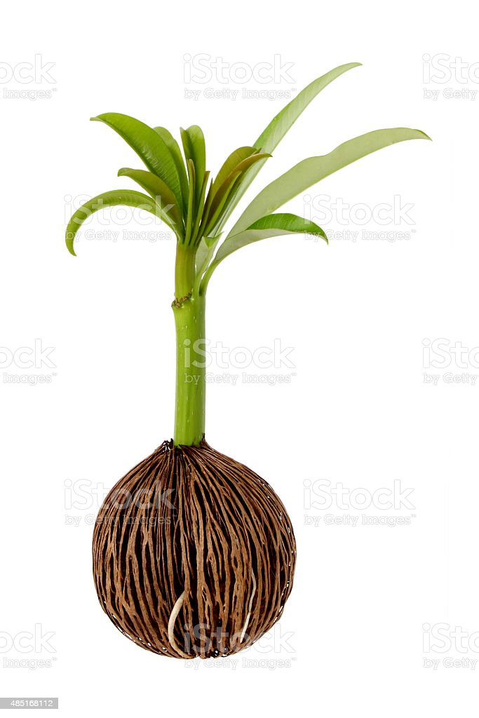 Young seed growing stock photo