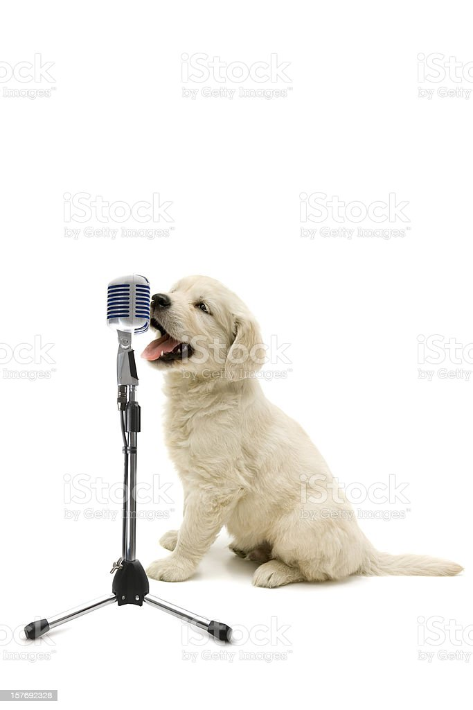 young singer royalty-free stock photo