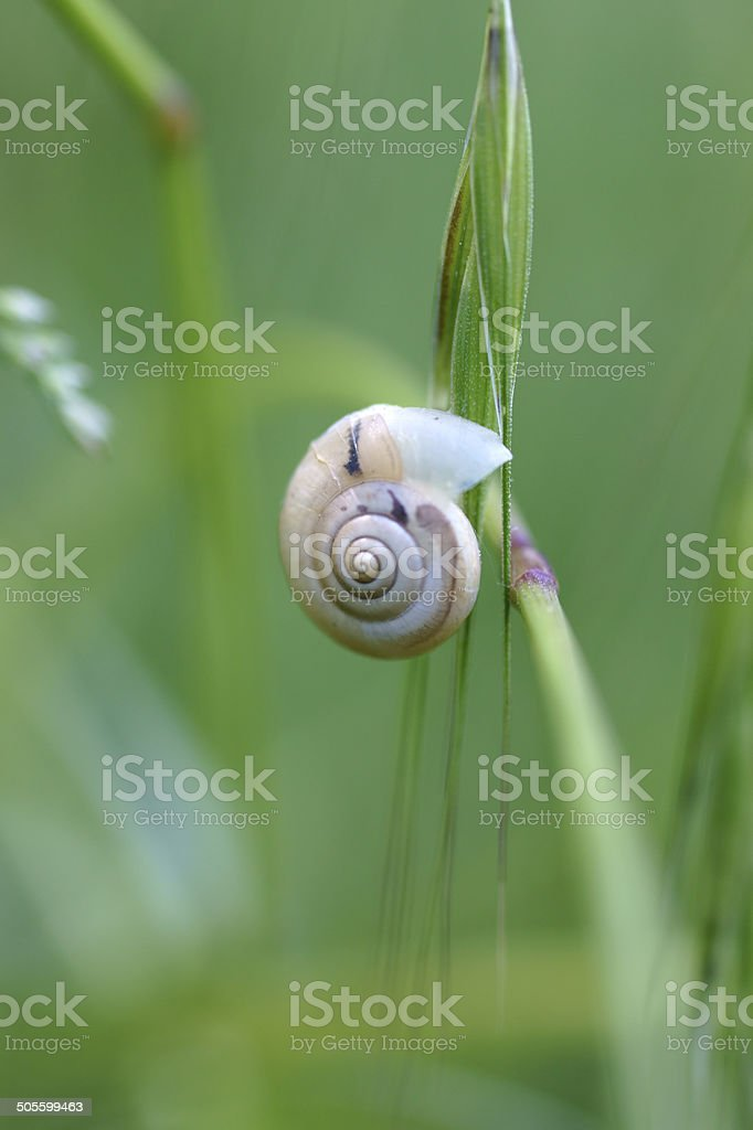 Young snail stock photo