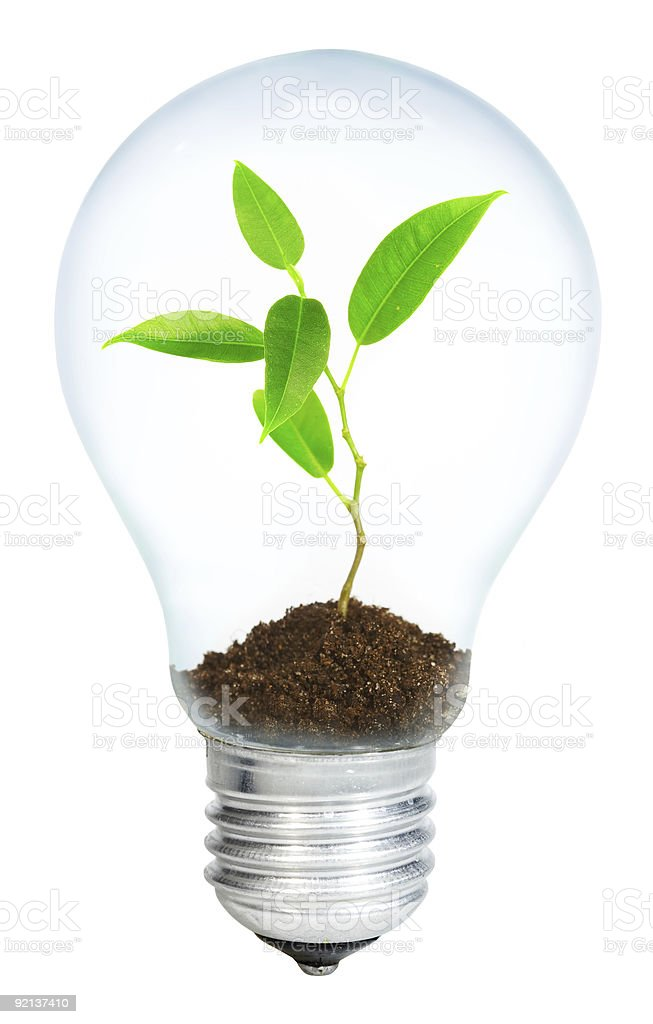 A young sport growing in a light bulb on a white background stock photo