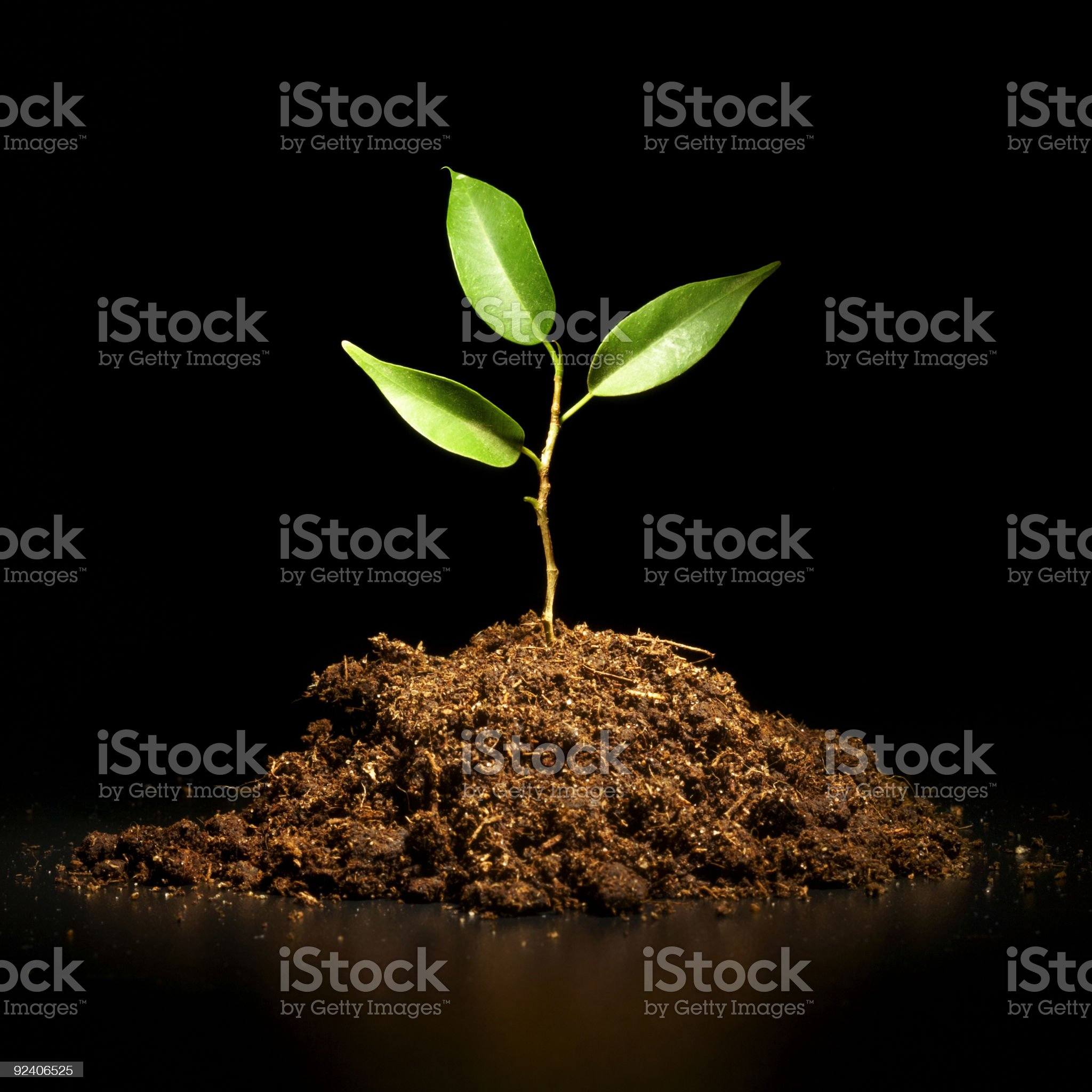 Young sprout on a black background royalty-free stock photo