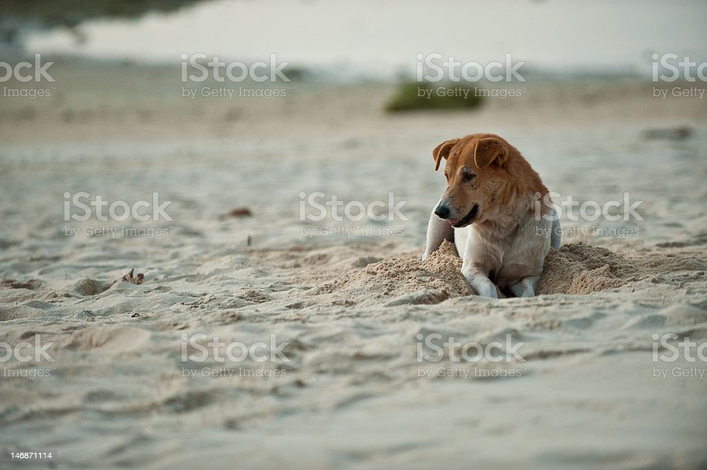 Young stray dog laying royalty-free stock photo