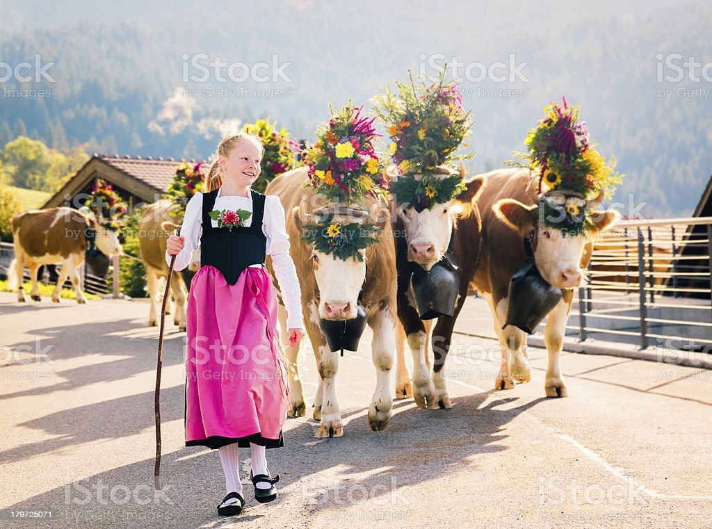 Young Swiss Farmer Girl Leading Cows to Fair stock photo