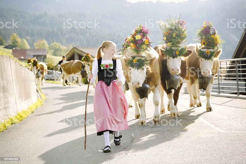Young Swiss farmer girl leading decorated cows to fair stock photo
