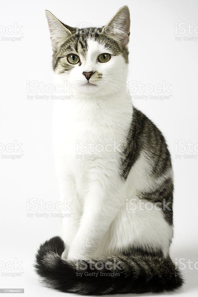 Young Tabby cat Portrait stock photo