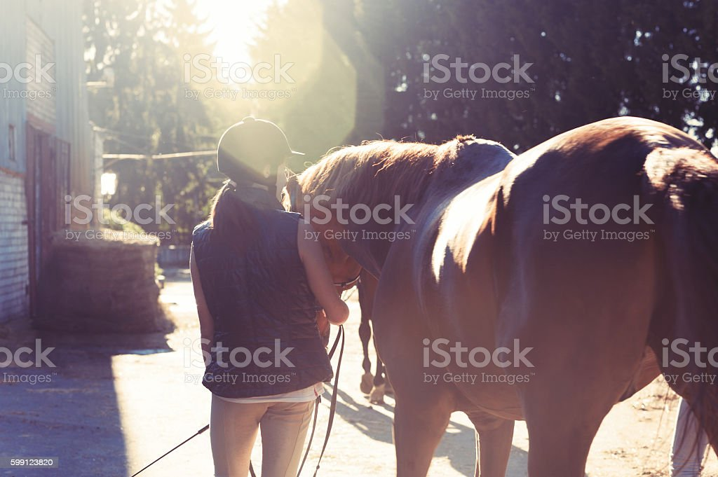 Young teenage girl equestrian leading her brown horse in sunbeam stock photo