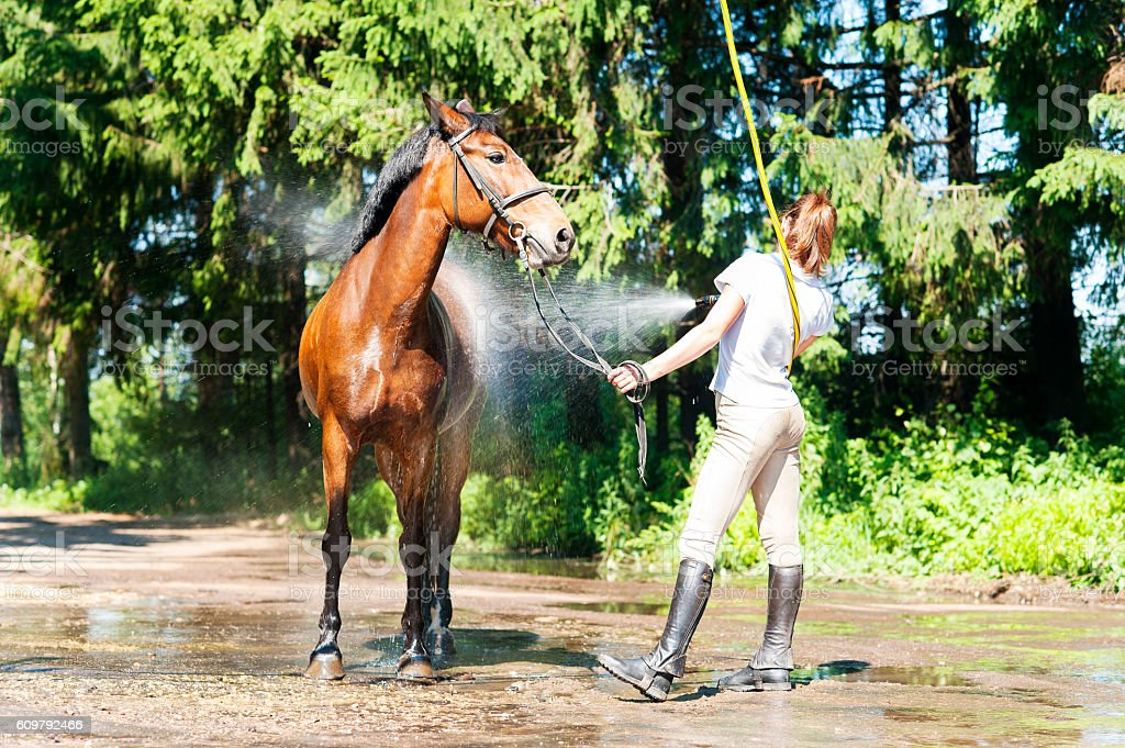 Young teenage girl equestrian washing her brown horse in shower stock photo