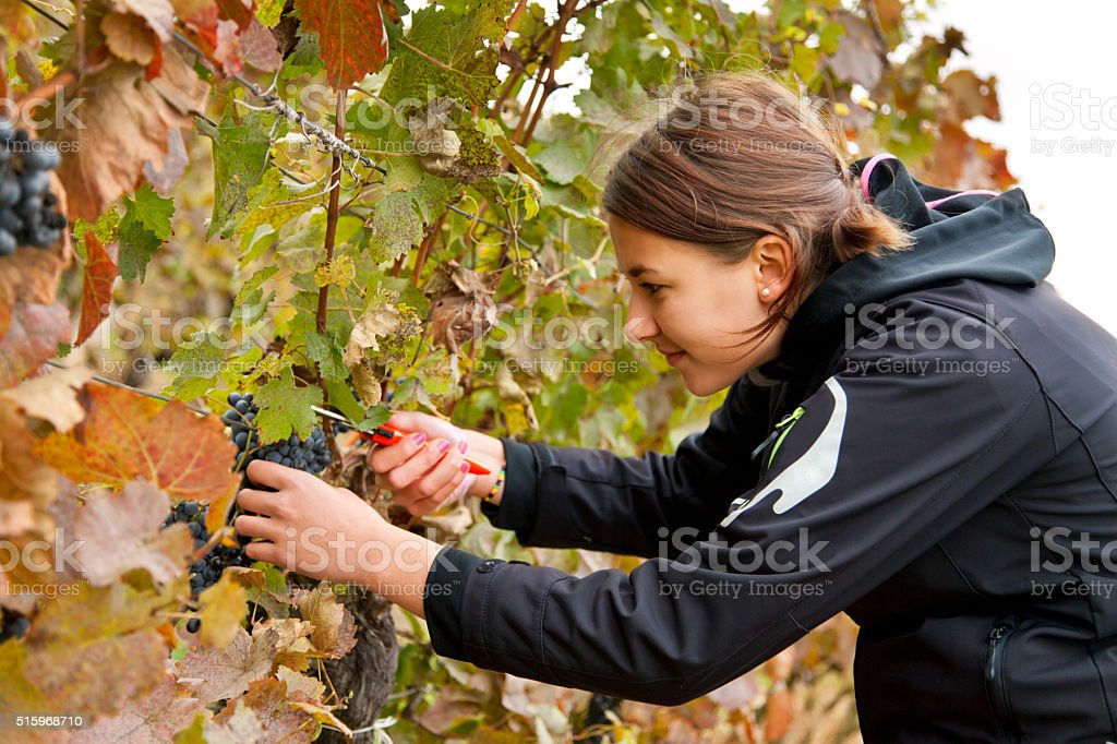 Young teenager girl in vineyard stock photo