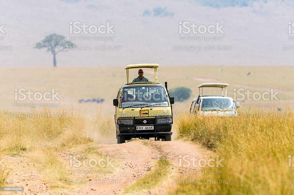 tourist man in off-road vehicle, He is watching real wild life in...
