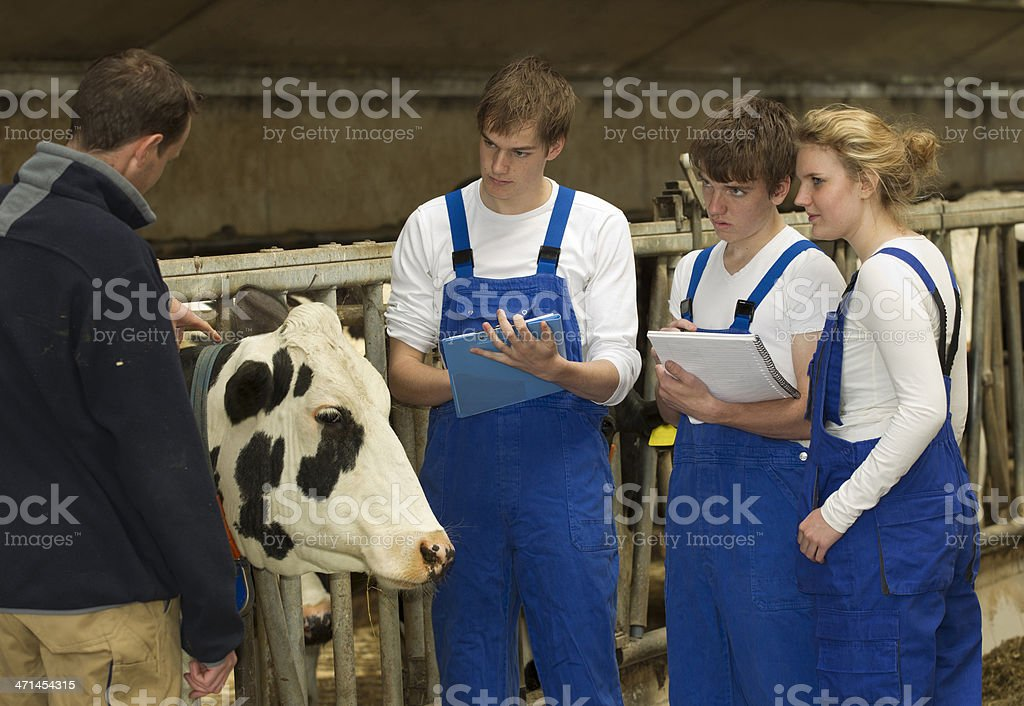 Young Trainees At Cattle Farm royalty-free stock photo
