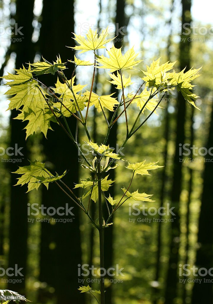 Young tree in a forest royalty-free stock photo