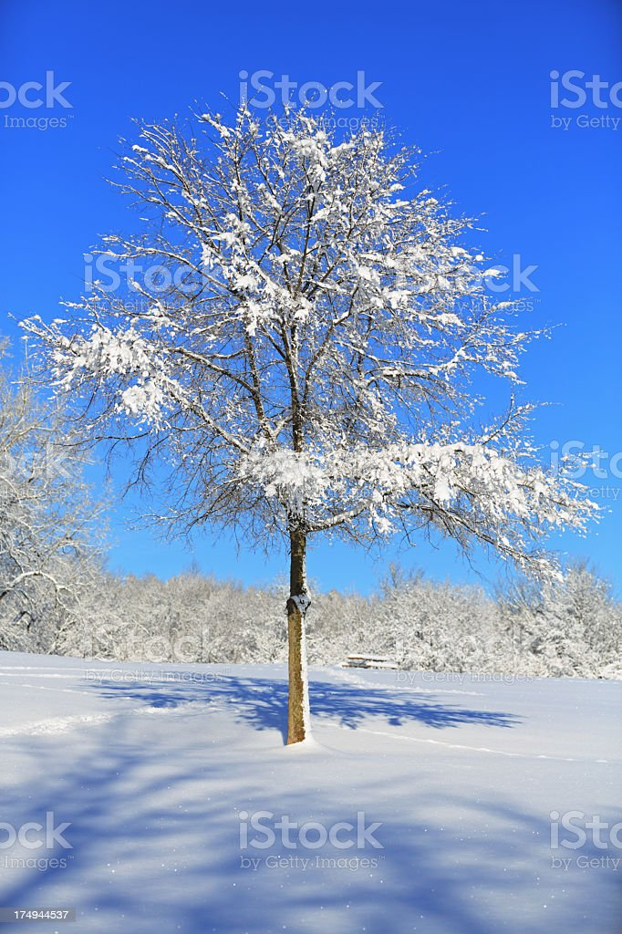 Young Tree in Fluffy Snow stock photo