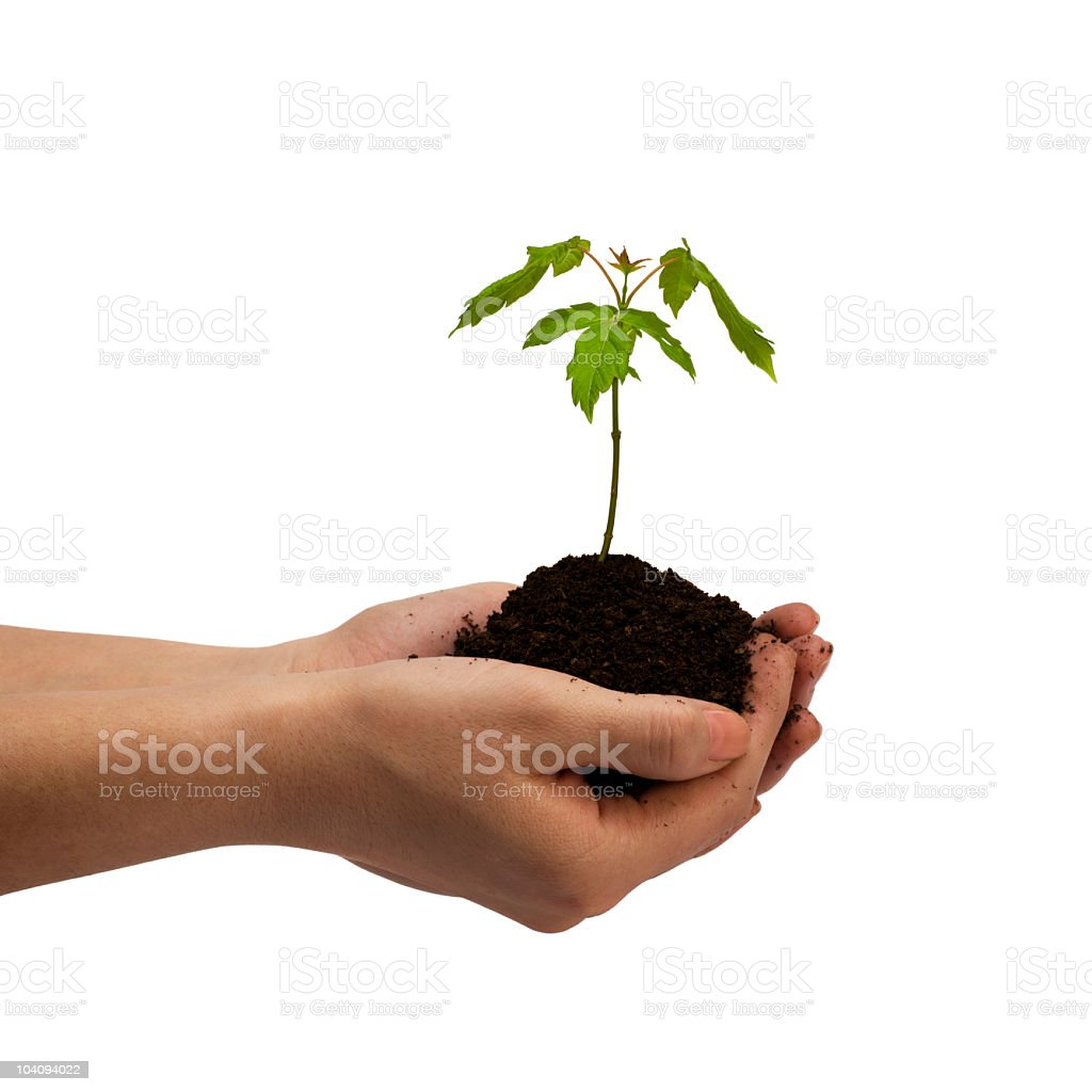 Young Tree in Hands stock photo